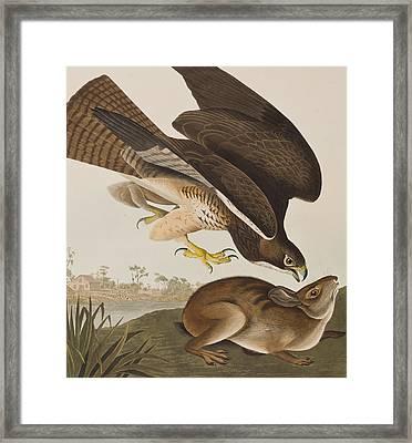 The Common Buzzard Framed Print by John James Audubon