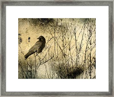 The Common Crow Framed Print by Gothicrow Images