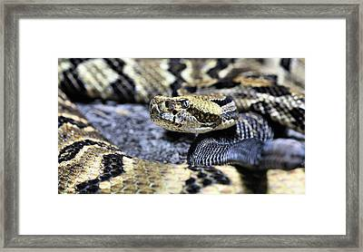 The Complaint Department Framed Print by JC Findley