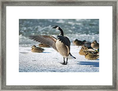 The Conductor Framed Print by Rob Blair