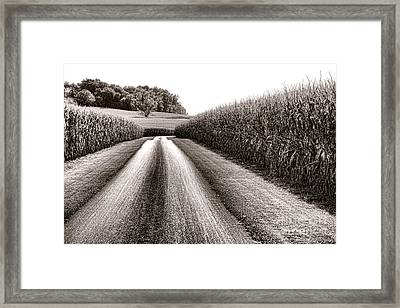 The Corn Road Framed Print by Olivier Le Queinec