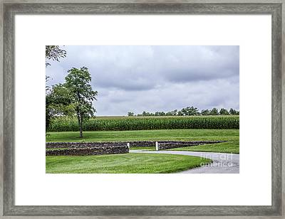 The Cornfield Framed Print by Kay Pickens