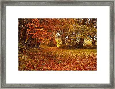 The Covered Path Framed Print by Cassius Johnson