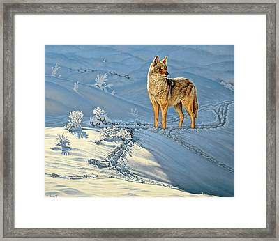 the Coyote - God's Dog Framed Print by Paul Krapf