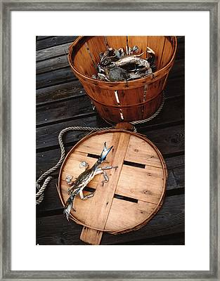 The Cranky Crab Framed Print by Skip Willits