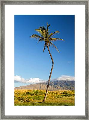 The Crooked Palm Tree Framed Print by Pierre Leclerc Photography