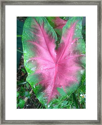The Crying Heart Framed Print by Lee Farley