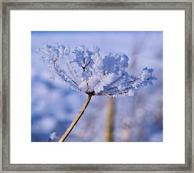 The Crystal Flower Framed Print by Dave Woodbridge