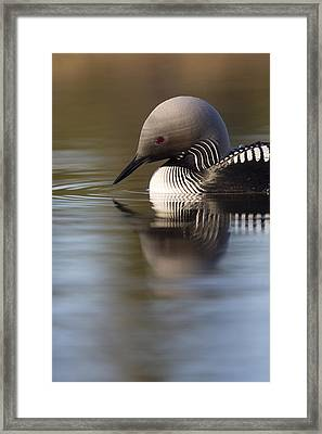 The Curve Of A Neck Framed Print by Tim Grams