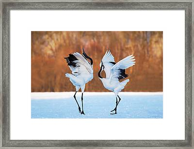 The Dance Of Love Framed Print by C. Mei