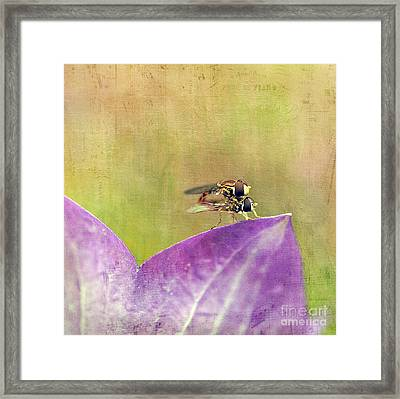 The Dance Of The Hoverfly Framed Print by Cindi Ressler