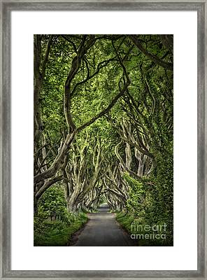 The Dark Hedges Framed Print by Evelina Kremsdorf