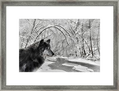 The Dark Wolf Framed Print by Lori Deiter