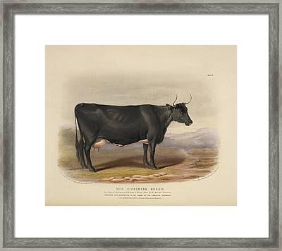 The Devon Breed Framed Print by British Library