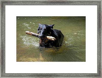 The Dog Days Of Summer Framed Print by Bill Cannon