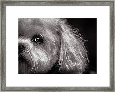The Dog Next Door Framed Print by Bob Orsillo