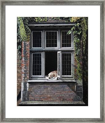 The Dog Of Bruges Framed Print by Scot White