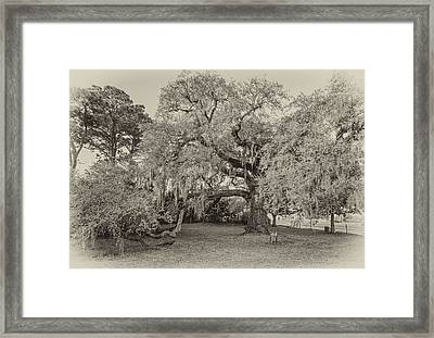 The Dueling Oak - A Place For Dying Bw Framed Print by Steve Harrington