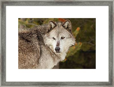 The Elder Framed Print by Sandy Sisti