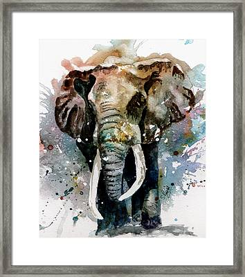 The Elephant Framed Print by Steven Ponsford