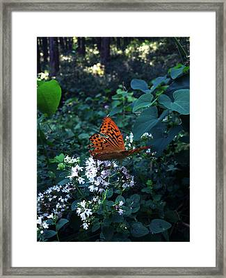 The Elf Framed Print by Lucy D
