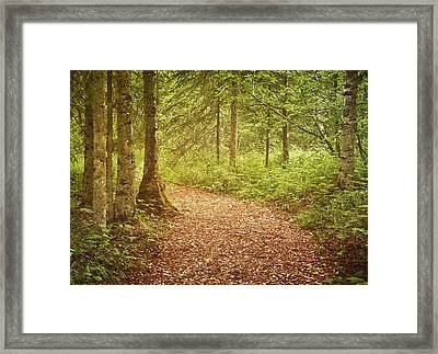 The Enchanted Forest Framed Print by Kim Hojnacki