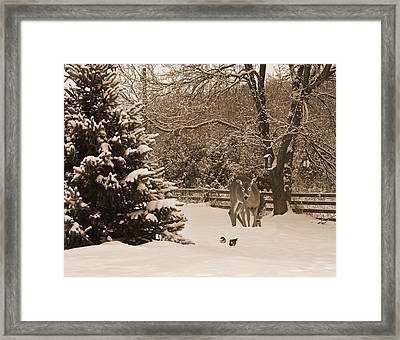 The Encounter. Framed Print by Kelly Nelson