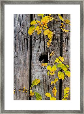 The End Is Always Near Framed Print by Andrew Pacheco