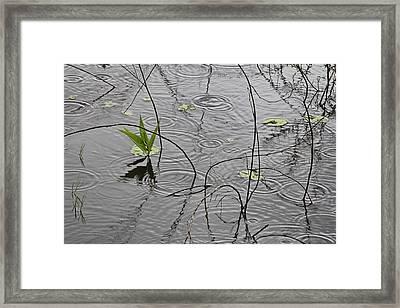 The Essence Of Rain Framed Print by Douglas Barnard