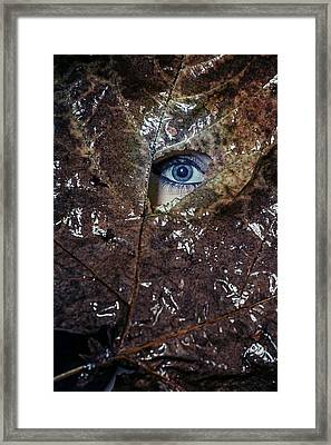 The Eye Framed Print by Joana Kruse
