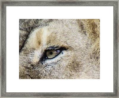 The Eye Of A Lion Framed Print by Michael Putthoff
