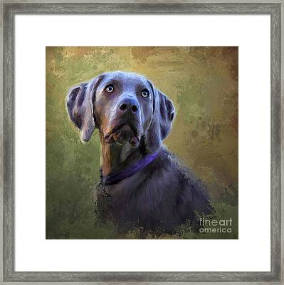 The Eyes Have It Framed Print by Andrea Auletta