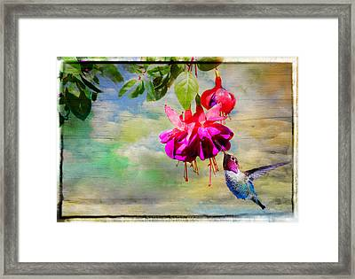 The Face Of Fuchsia Framed Print by Lynn Bauer