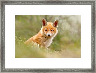 The Face Of Innocence _ Red Fox Kit Framed Print by Roeselien Raimond