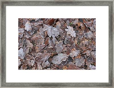 The Fallen Framed Print by Jean Walker