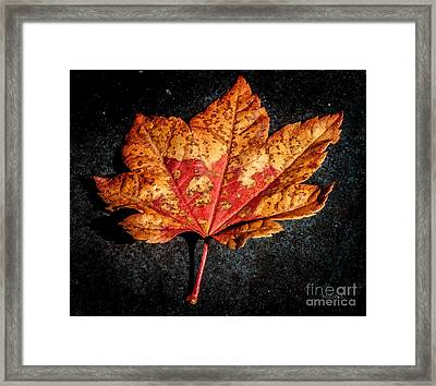 The Fallen Framed Print by Mitch Shindelbower