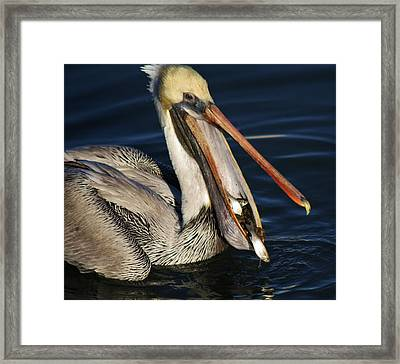 The Fish Got Away Framed Print by Paulette Thomas