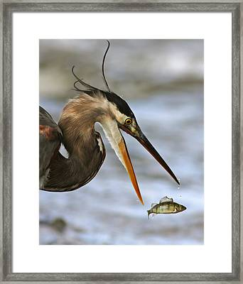 The Flying Fish Framed Print by Mircea Costina Photography