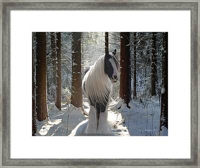 The Forest Beauty Framed Print by Terry Kirkland Cook