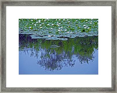 The Forest Beneath The Lilypads Framed Print by Jean Hall