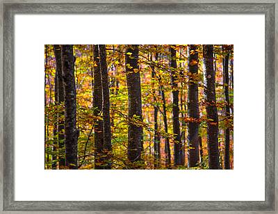 The Forest Framed Print by Stefano Termanini