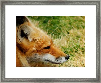 The Fox 7 Framed Print by Ernie Echols