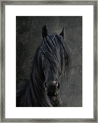 The Frisian Framed Print by Joachim G Pinkawa