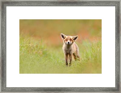 The Funny Fox Kit Framed Print by Roeselien Raimond