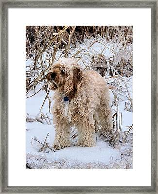 The Fur Coat Framed Print by JC Findley