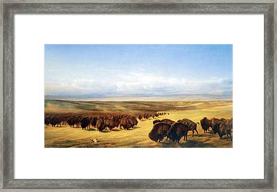 The Gathering Of The Herds Framed Print by William Jacob Hays