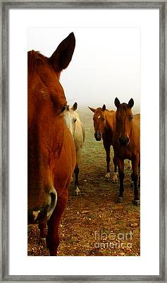 The Gauntlet - Horses Framed Print by Robert Frederick