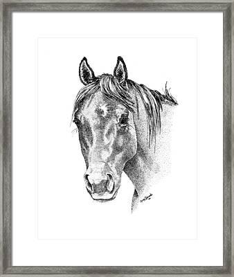 The Gentle Eye Horse Head Study Framed Print by Renee Forth-Fukumoto