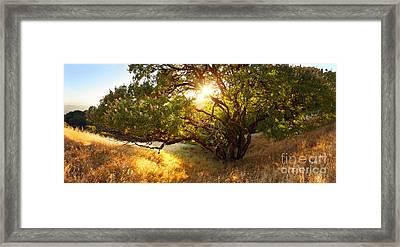 The Giving Tree Framed Print by Matt Tilghman