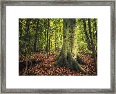 The Giving Tree Framed Print by Scott Norris